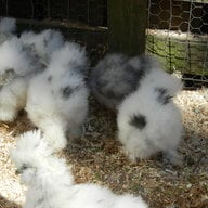 Southernsilkies