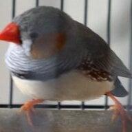 BirdNut