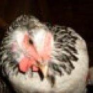 chickenlover205