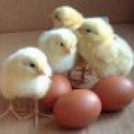 ChickenGirl3