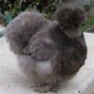 Chicken Casanova