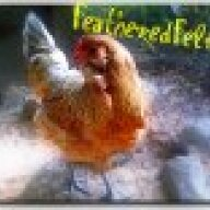 FeatheredFeline