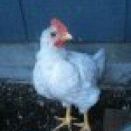 ChickenLove123