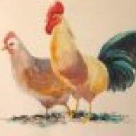 The Chicken Lover 11