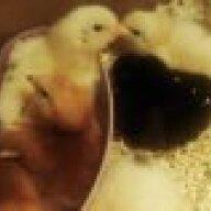 chickenlady4321