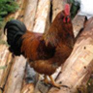 chick4smiles