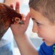 chickensRcute