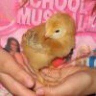 newchickenfamily