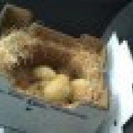 edible_chicken