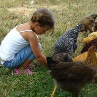Hawk&Hens