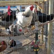 chickmama1662