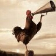revolution rooster