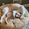RoosterML