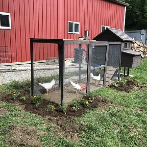 Backyard Chicken Coop Kit chicken coop nw coop kit | backyard chickens