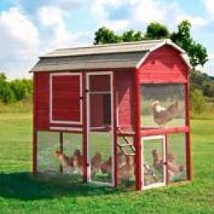 Precision Walk In Red Barn Chicken Coop