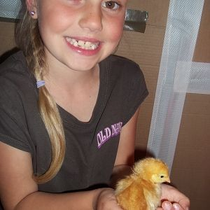 My daughter Makenah meeting the chicks for the first time when she got home from school! She loves them!