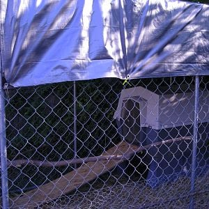 you can not tell but there are 3 branches set as perches and is covered by a tarp. they run the yard most of the time but for their safety we lock the gate to the 6X10 kennel at night or when will be gone most of the day.