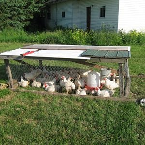 This is for broilers it is 8x6 and holds 20-30 birds