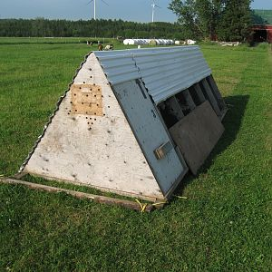 I have two of these coops for broilers it is 5x16 and has no bottom for the birds to eat grass