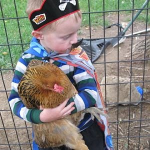 My son Loves the chickens!