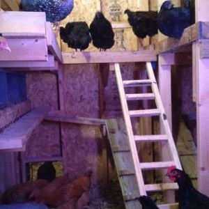 Girls getting ready for bed inside coop