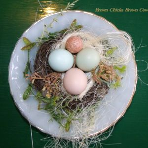 Ameraucan egg on left, d'Amicauna (green egg) on right, and Silkie egg bottom center.