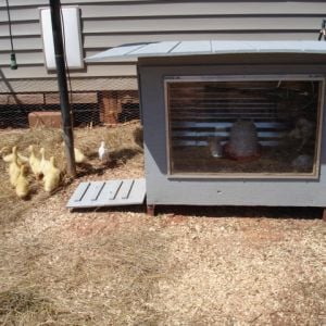 Chicken / Duck coop