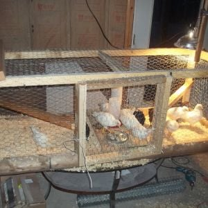 So the rabbit cage was getting small, really fast.  I threw this together downstairs with help from one of my daughters.  It is NOT pretty....only functional