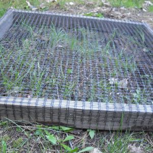 This is how I give my girls some grass.  Its made from 2x4's=4x4 feet square w/ 1x1 deer netting from Lowes on top.  I lay it down where I want it, w/ bricks in the center, to keep the girls from stretching the screen apart when they get on top.  I sprinkle loam into it and then I sprinkle in some grass seed.  Water n wait, and in a few weeks their eating what's sprouting threw and as it grows they keep it trimmed!  I pick up and carry to another spot once I want to give them the royal treatment!
