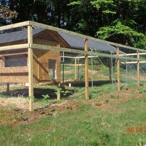 Their coop and pin, still need to paint and add some trim and the nesting box.