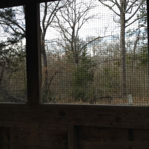 The view out the north window of the coop.