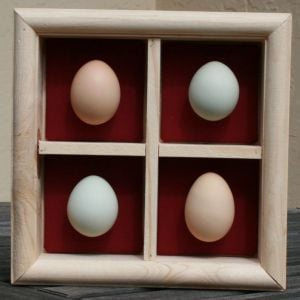 A shadowbox I made for my sister, with the eggs laid on her birthday!