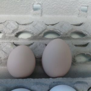 2nd egg (left) next to 3rd egg