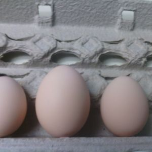 in order from left to right 2nd egg, 3rd egg, 4th egg