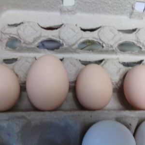 left to right. 2nd egg, 3rd egg, 4th egg, 5th egg.