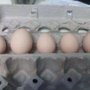 left to right, 2nd, 3rd, 4th, 5th, 6th egg. My hen has laid every day. Between the first egg to the second egg there was a 3 day lapse, but since then it's been every day.