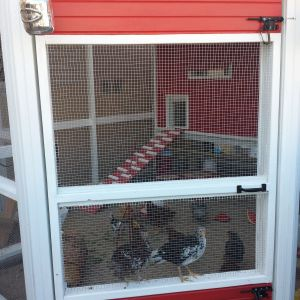 The door to the coop opens inward and the girls jump up and ride the door as I ope it