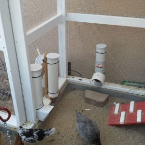 PVC Pipe feeders and waterer