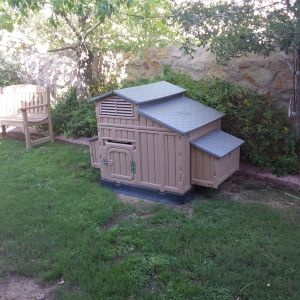 in the back yard we have a coop for the chicks when they free range