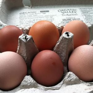Brown eggs:  Marans, Golden Buff and Buff Orpington