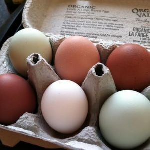 EE, Buff Orp, Marans and Dorking eggs