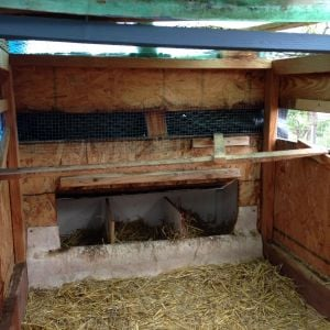 Small coop will be set up as a brooder for our 1 1/2 week old chicks. They will be moved this week to the coop.