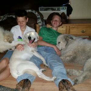3 of my 4 kids -- (left to right) Amy (on the couch), Asher and Alex, with our puppy Mack, my sister's yellow lab Grace, and Rocky. Not sure why Millee wasn't in on the chaos. She's a jealous dog and doesn't like to share her kids.