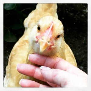 Ronda and her closeup