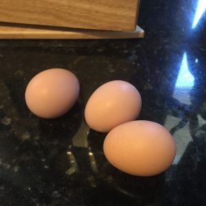 Our first 3 eggs!  We didn't realize that our RIR was laying yet, we checked after I noticed that she jumper out of the nesting box and low and behold... 3 weeks later our Barred Rock started and another 2 weeks after that, one of our buffs... now waiting of the rest of the freeloaders