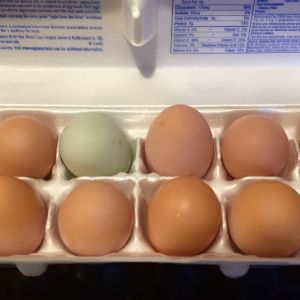 "Finally have a dozen!  We have had to buy eggs for awhile now, but finally the hens are ""paying their rent"""