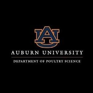 Virtual Chicken Auburn University Dept of Poultry Science
