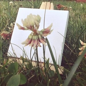 Painting in the Grass