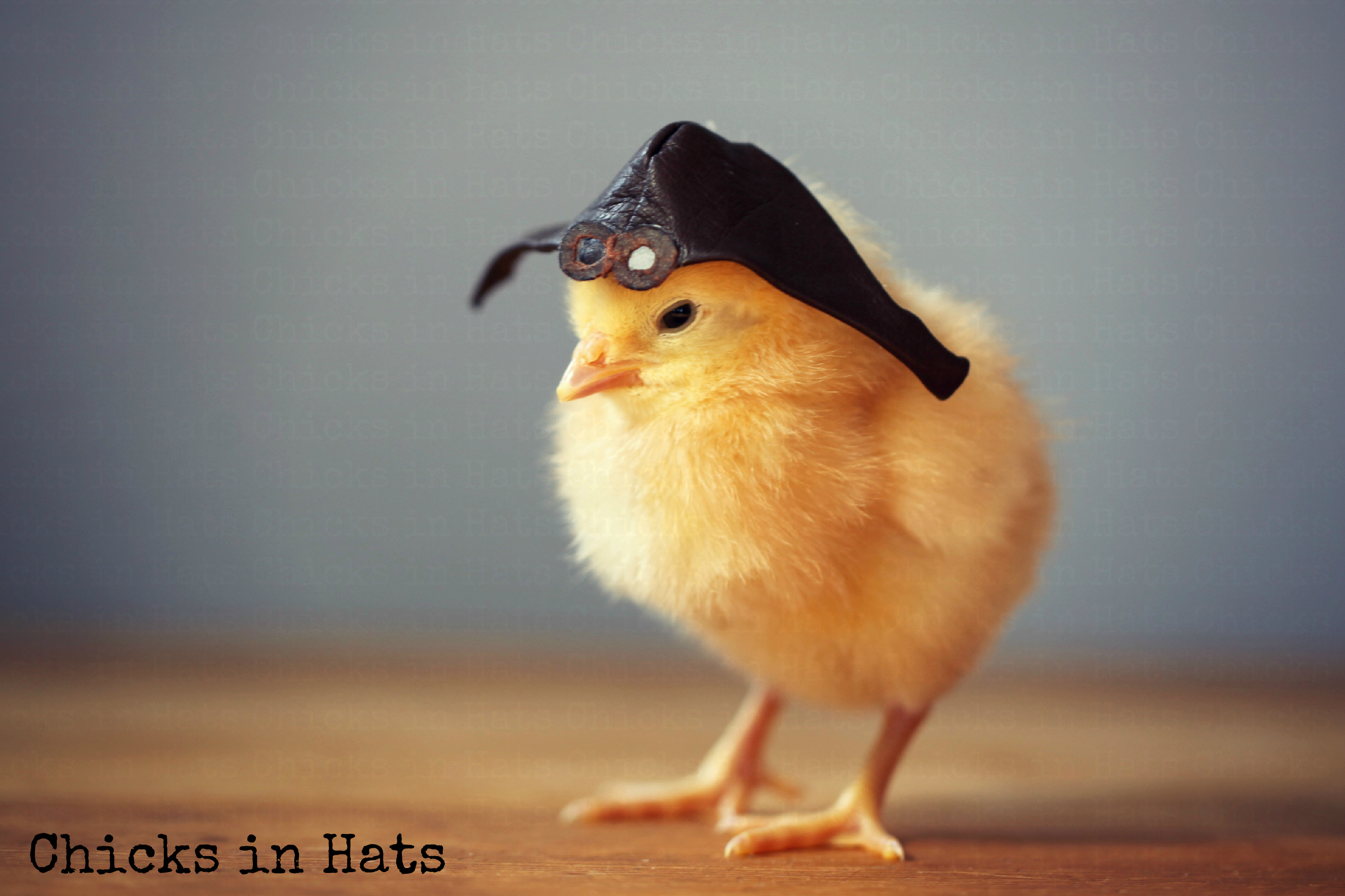 Chicks in Hats.