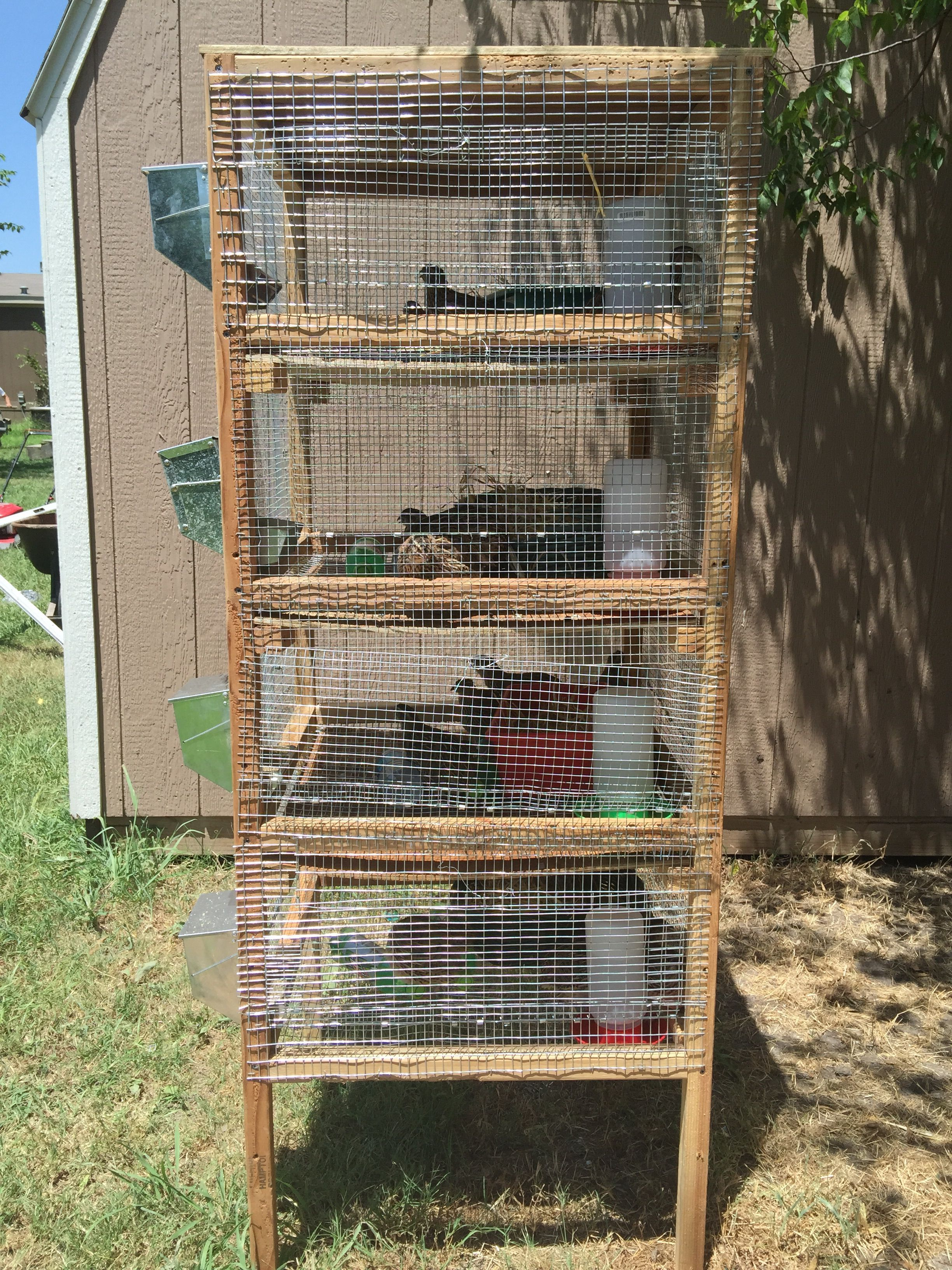 I Turned That Old Mice Rack Into My New Jumbo Brown Coturnix Quail Wwwbackyardchickenscom Forum Uploads 33115eggpartsdiagramgif House Each